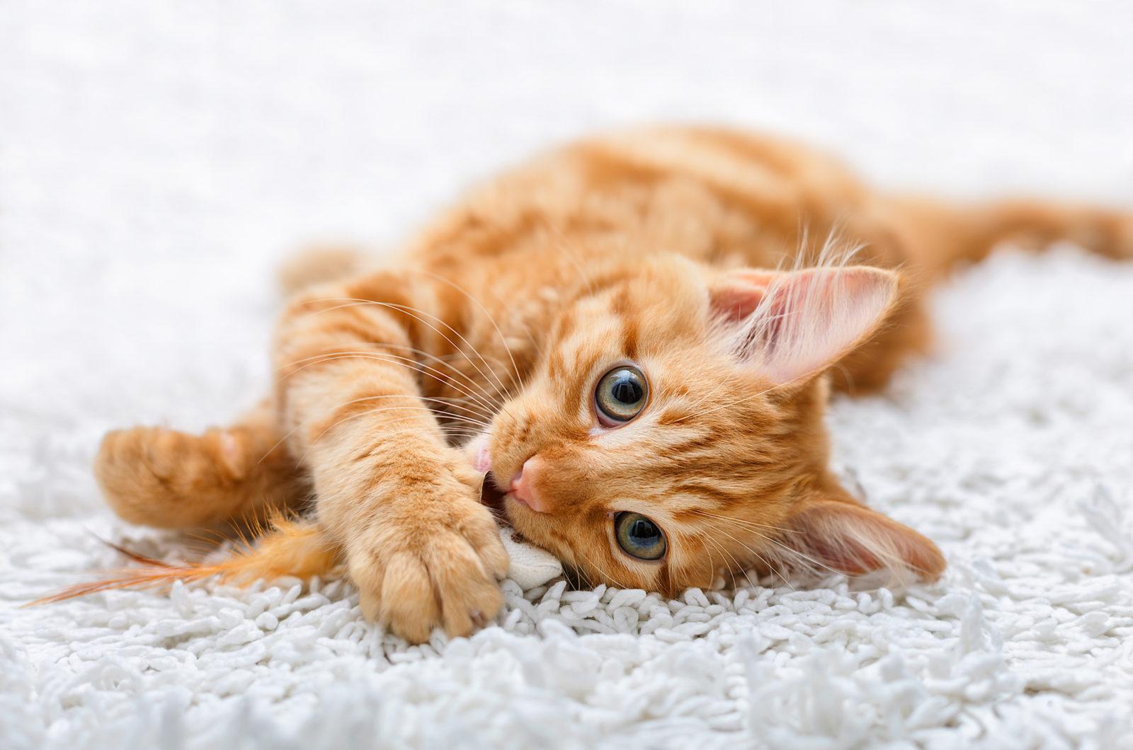 Tierheim-Katze